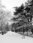 И в Саках бывает снежно...