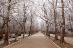В сакском парке зимой