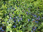 Цветы в сквере Бурденко