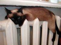 «КрымТЭЦ» объявила о готовности к зиме, 25 октября 2009