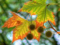 """7 ноября состоится праздник """"Краски Бабьего Лета"""", 5 ноября 2010"""