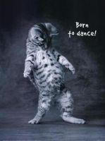 Танцы для взрослых и детей