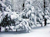 Зимний отдых в Саках