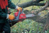Зимняя обрезка деревьев в Саках