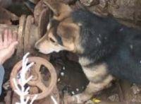 В Саках спасатели МЧС спасли собаку