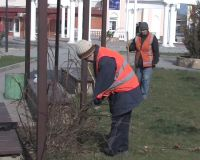 В Саках приступили к высадке растений на улицах и площадях города