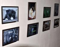 В Симферополе открылась фотовыставка сакского врача
