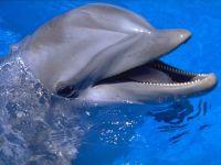 К лету в Евпатории откроют большой дельфинарий, 7 февраля 2012