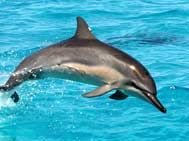 29 апреля в Евпатории откроется крупнейший в Украине дельфинарий
