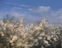 Совмин Крыма планирует организовать несколько ландшафтных парков, 12 сентября 2012