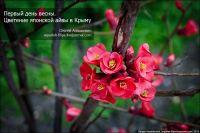 В Крым ворвалась весна, 3 марта 2013
