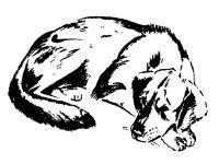 Жестокое обращение с бездомными животными в Саках, 28 июля 2014