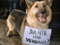И снова у нас в Саках травят собак