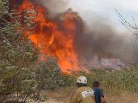 Пожар под Новофедоровкой