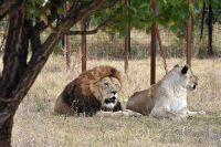 Защитите Сафари-парк «Тайган» и Ялтинский зоопарк «Сказка»!, 11 декабря 2015