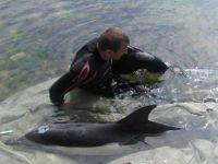 На сакском берегу спасли дельфина