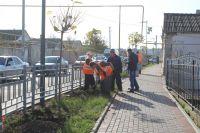 На Симферопольской начали высаживать деревья