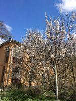 В Саках началась весна