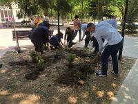 Сакские выпускники посадили деревья