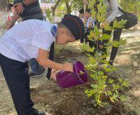 В Саках посадили кленовую аллею